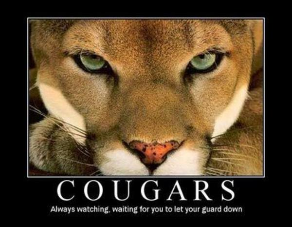 CougarMotivational